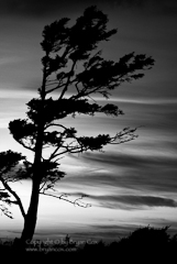 Photo of a tree at sunset, Ecola State Park, Oregon